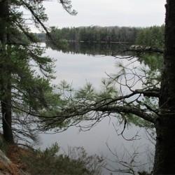 Hardy Landscape 1