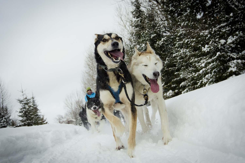 Algonquin Park Dog Friendly Hotels