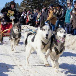 Kearney Dog Sled Race - Feature