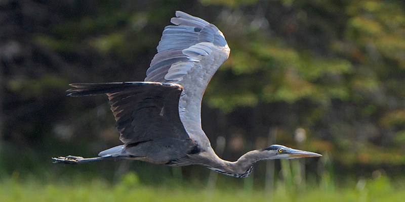 Birding 2