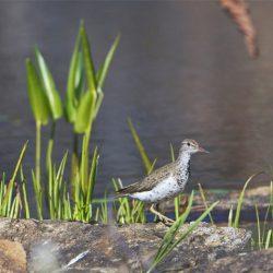 Birding - Feature Image