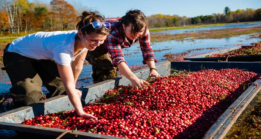 Amazing-Places---Cranberry-