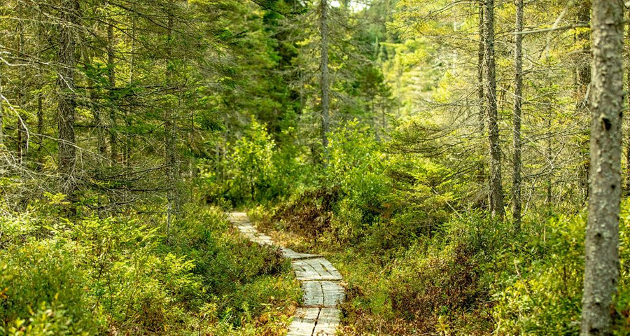 This image has an empty alt attribute; its file name is Trails-GCW-1.jpg
